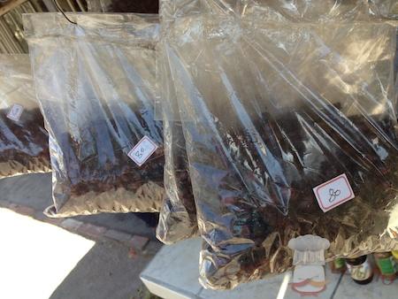 Paquete de hormigas culonas en carreteras colombianas