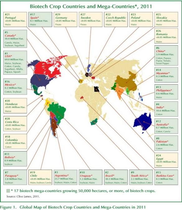 Cortesía www.isaaa.org