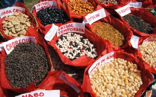 Semillas nativas (Cortesía: blackhillsgarden.com)