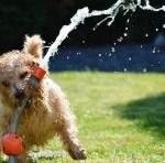 Hund beim Baden