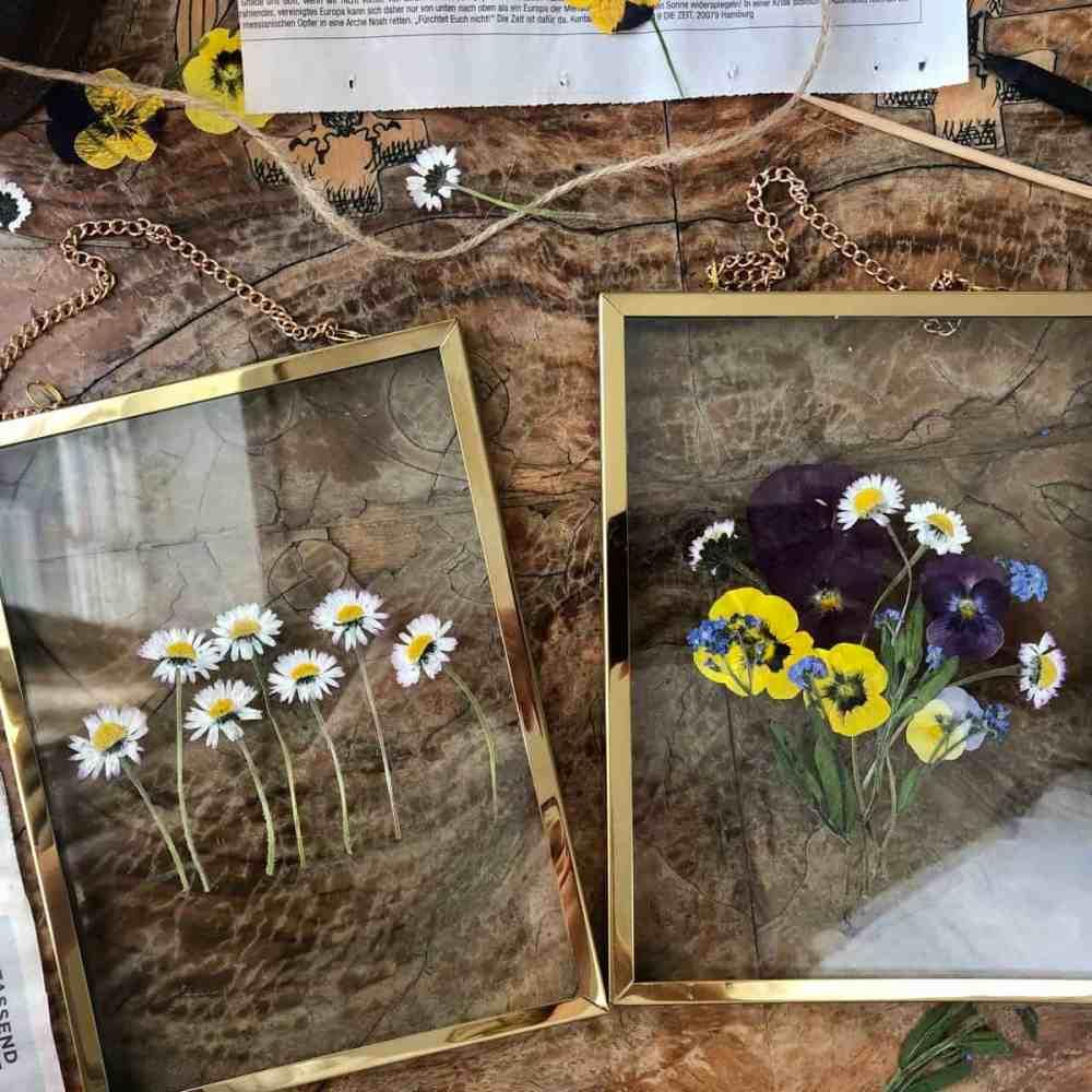 Gepresste Blumen hinter Glas.