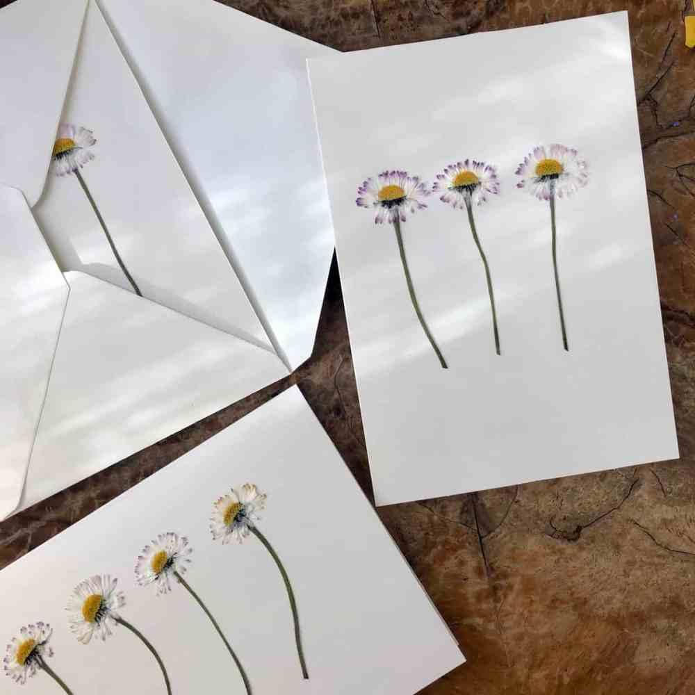 Blumen pressen