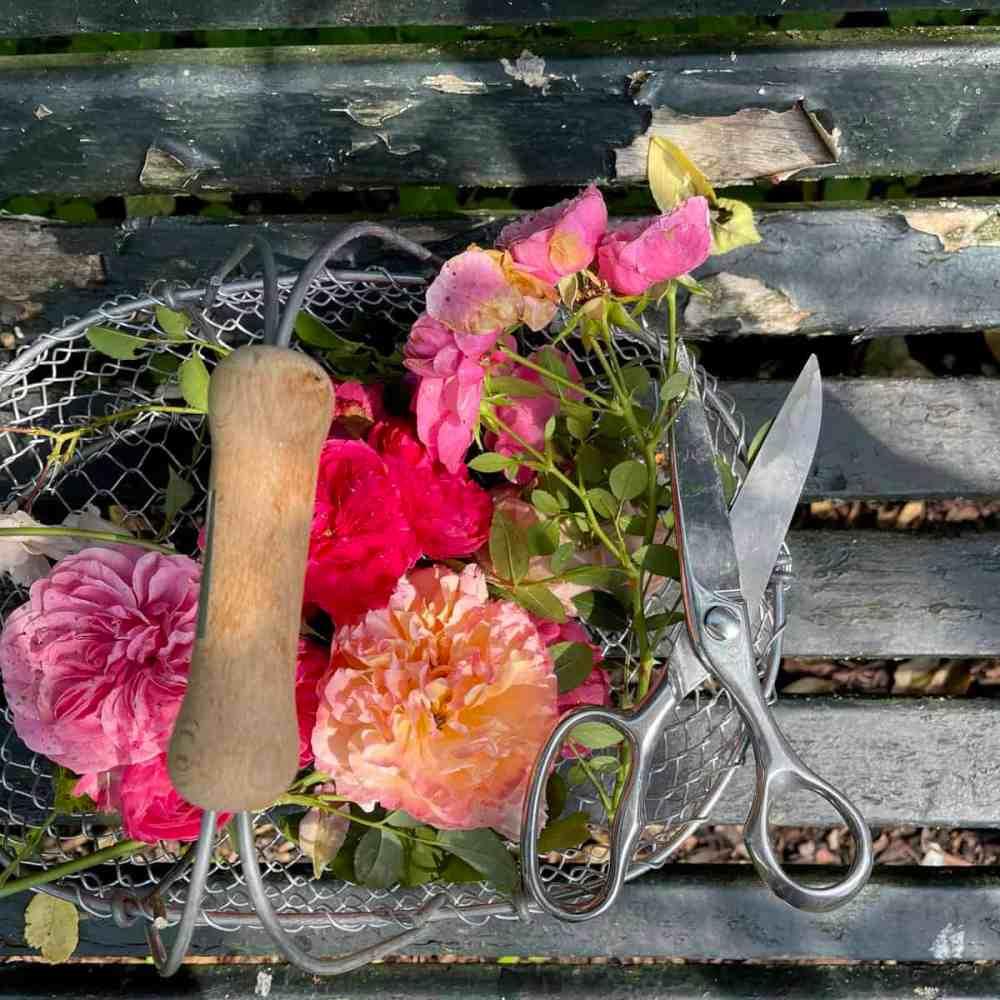 Rosen aus dem eigenen Garten.