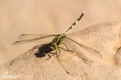 Ta Keo - Libelle sonnt sich