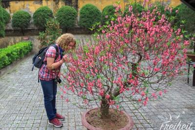 Überall blühende Pfirsichbäume