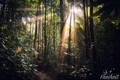 Sonnenstrahlen dringen durchs Dickicht