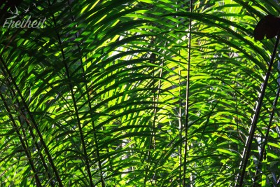 Dschungelgrün