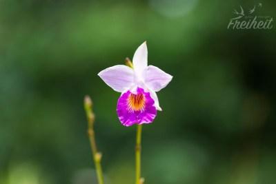 Im Orchideenpark