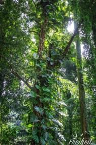 Dschungel Feeling
