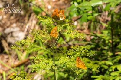 So viele Schmetterlinge auf einen Haufen