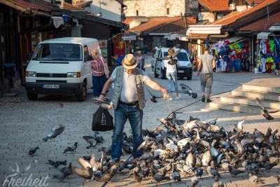 Tauben füttern am Sebilj hat Tradition