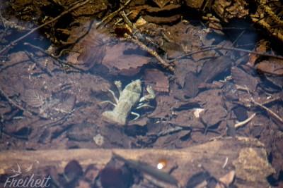 Auch diese Gesellen tummeln sich in den Gewässern (leider nicht ganz scharf)