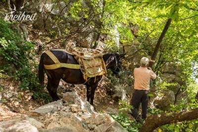 Getränke für die Berghütte werden noch per Lasttiere hochgebracht