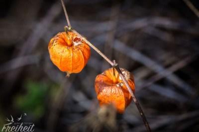 Der Herbst ist angekommen - wir merken es nicht nur an den Temperaturen!