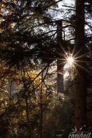 Die Sonne, ein Stern