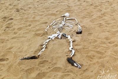 Skeleton Coast - passend mit einem Robbenskelett