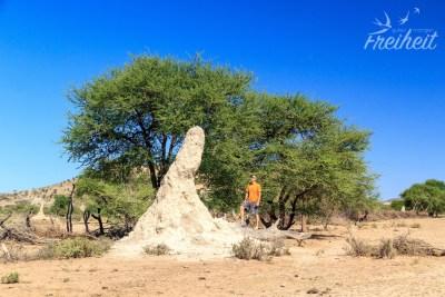 Ein Termitenbau der größeren Sorte - aber die gehen noch größer!