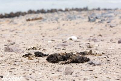 Auf dem Weg zu den Robben treffen wir auf die ersten Toten