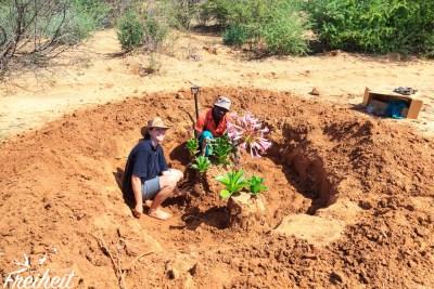 So groß, dass es vor den Straßenbauarbeiten umgepflanzt und gerettet wird