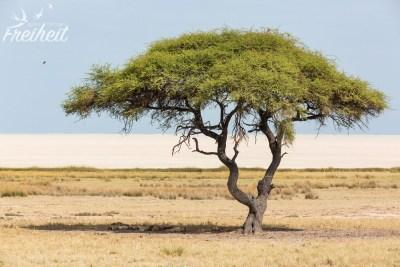 Löwenrudel unter dem Schatten des Baumes