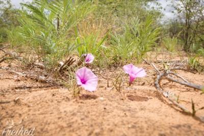 Blumen in der Wüste!