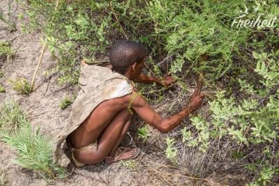 Unter diesem Busch, tief unter der Erde, liegt die Wasserfrucht