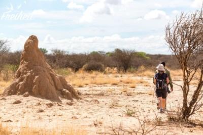 Und überall wieder riesige Termitenhügel