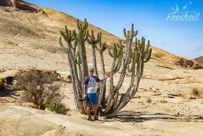 Riesiger Kaktus!