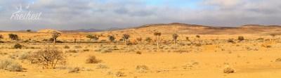 Wüstenvegetation