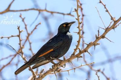 Pünktlich zur Essenszeit kommen die ersten Vögel vorbei :)