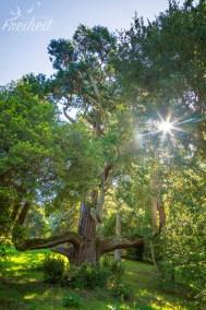 Auch in diesem Park stehen wieder prächtige Bäume!