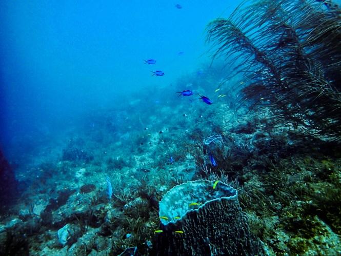 Korallenriff in Taganga, Kolumbien