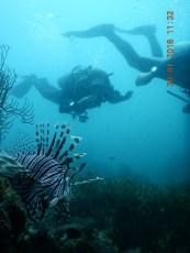 Lion Fish und wir