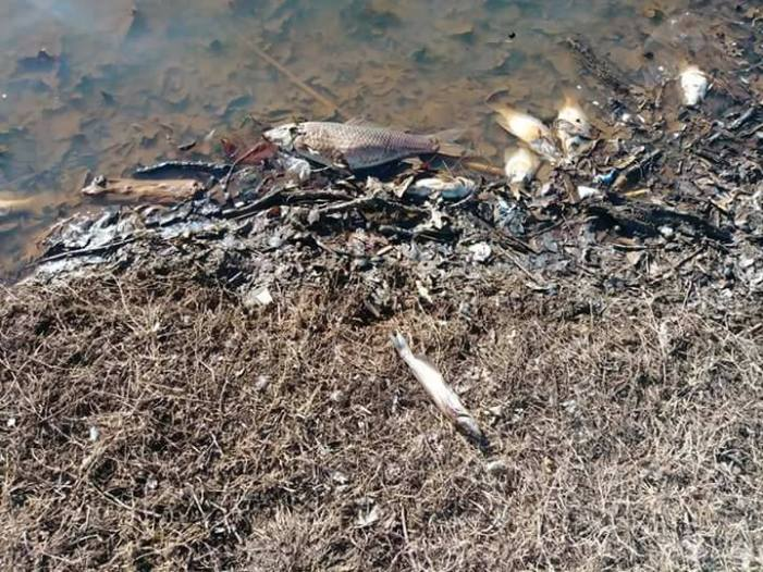 Water line breaks results in several dead fish in ponds at Mineral Wells Park