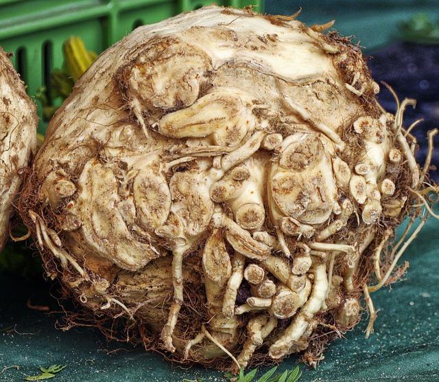 celery root closeup
