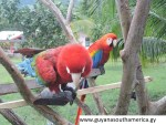 The Lethem - Linden Trail - Scenes - Macaws