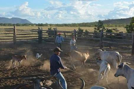 My Life on the Pirara/Meritezeiro Ranch – by Denise D'Aguiar