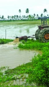 Water being pumped out of rice lands