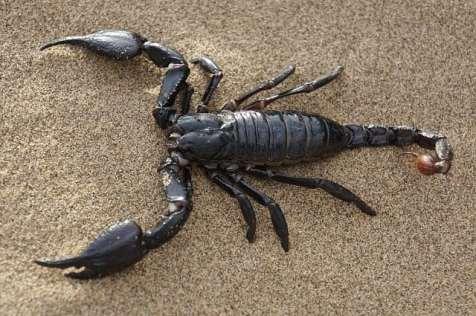 scorpion zodiac sign traits
