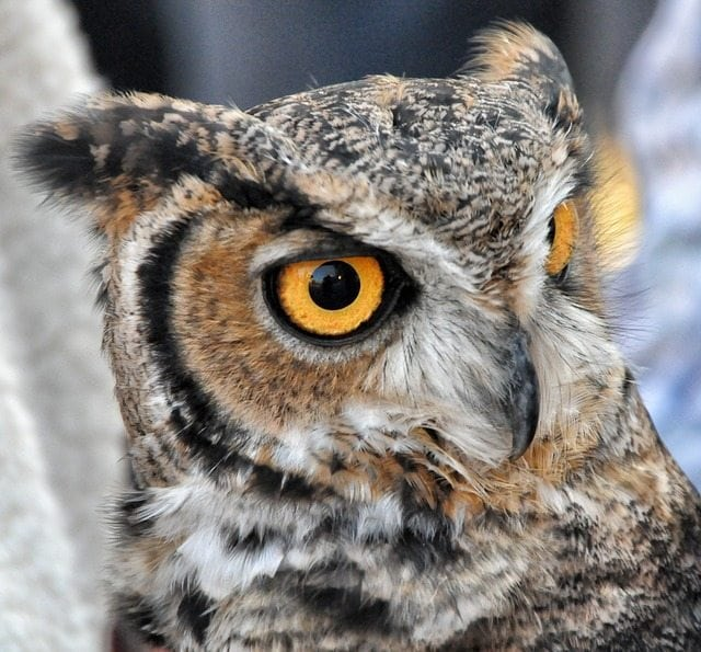 Owl symbols and meaning with myths