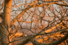 Branches orangées (1024x681)