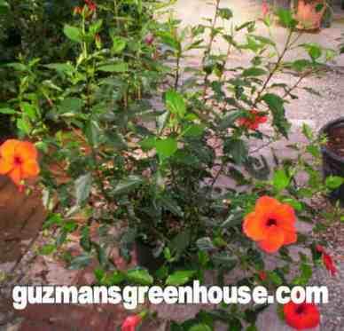 Las Cruces Houseplants