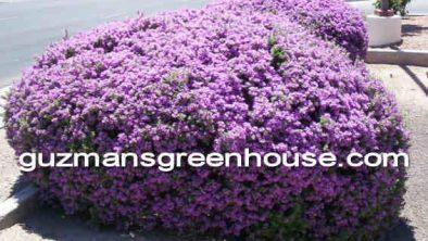 Green Cloud Sage