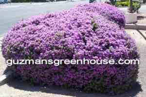 Xeriscape landscaping ideas
