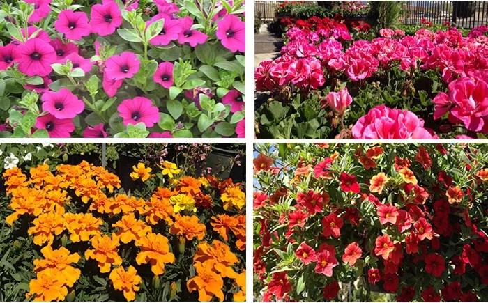 Easy Spring Gardening Tips Great Spring Flowering Tips
