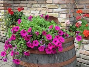 Easy Colorful Container Garden Ideas