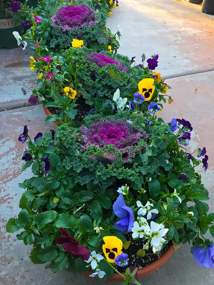 Colorful Plants for winter