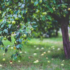 How to keep birds away from fruit trees