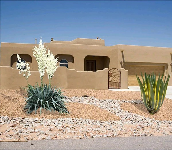 Yuccas for Landscaping