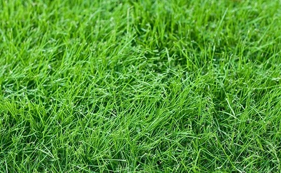 Sod and Lawn Tips